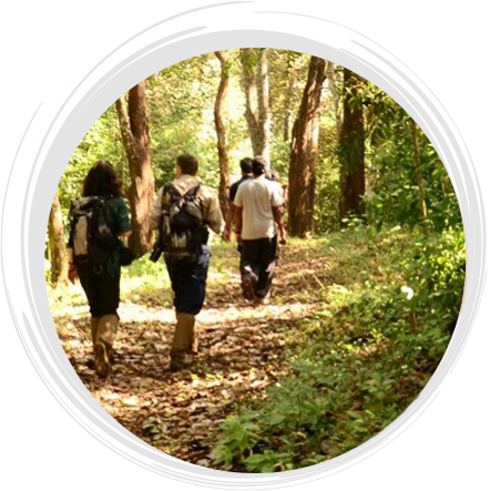 nature_walk_near_holiday_vista_thekkady
